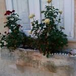 Цветы (розы) на окне. Мдина, Мальта