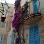 Вьющиеся растение типа плюща на стене дома. Мдина, Мальта